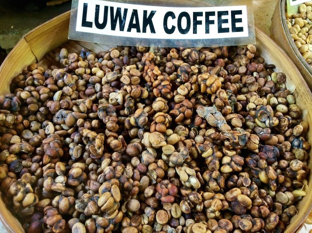 Weirdest Foods: Kopi Luwak