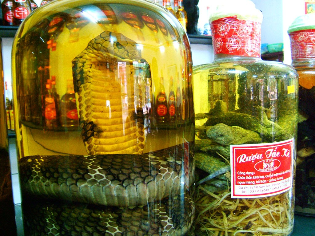 Weirdest Foods: Snake Wine