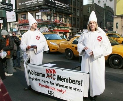 Controversial Ads: KKK AKC Ad
